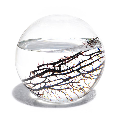 Large sphere ecosphere touch of modern for Self sustaining fish tank