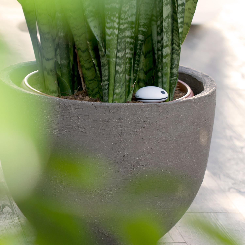 Wi fi plant sensor free app koubachi touch of modern - Monitor your indoor plants with the koubashi wi fi sensor ...