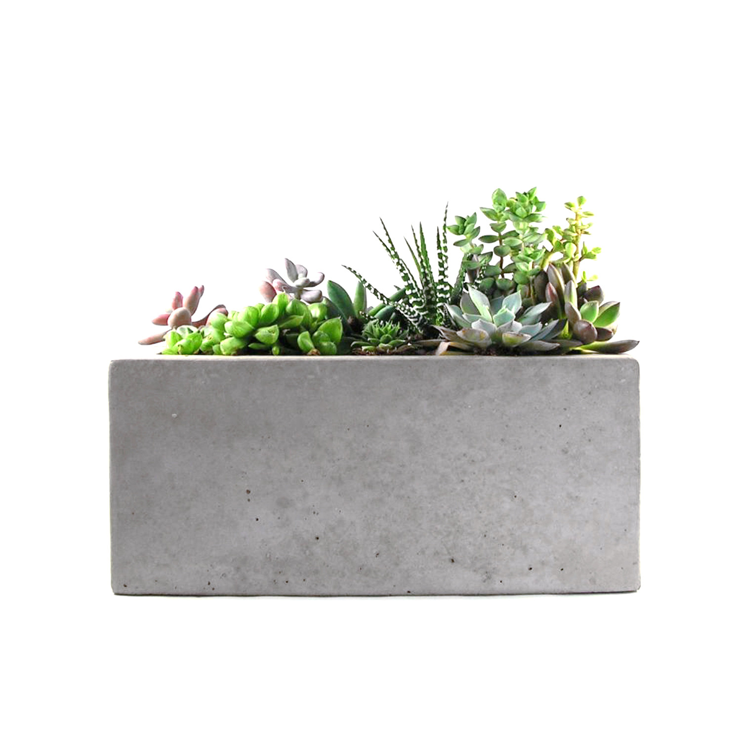 rectangular concrete planter  rough fusion  touch of modern - rectangular concrete planter