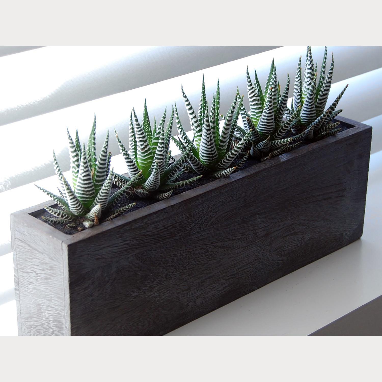 5 x cactus kiri wood planter lushmodern touch of modern for Wooden cactus planter