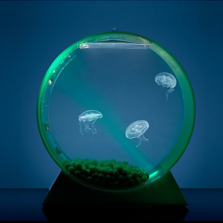 Desktop Jellyfish Tank // Deluxe Kit