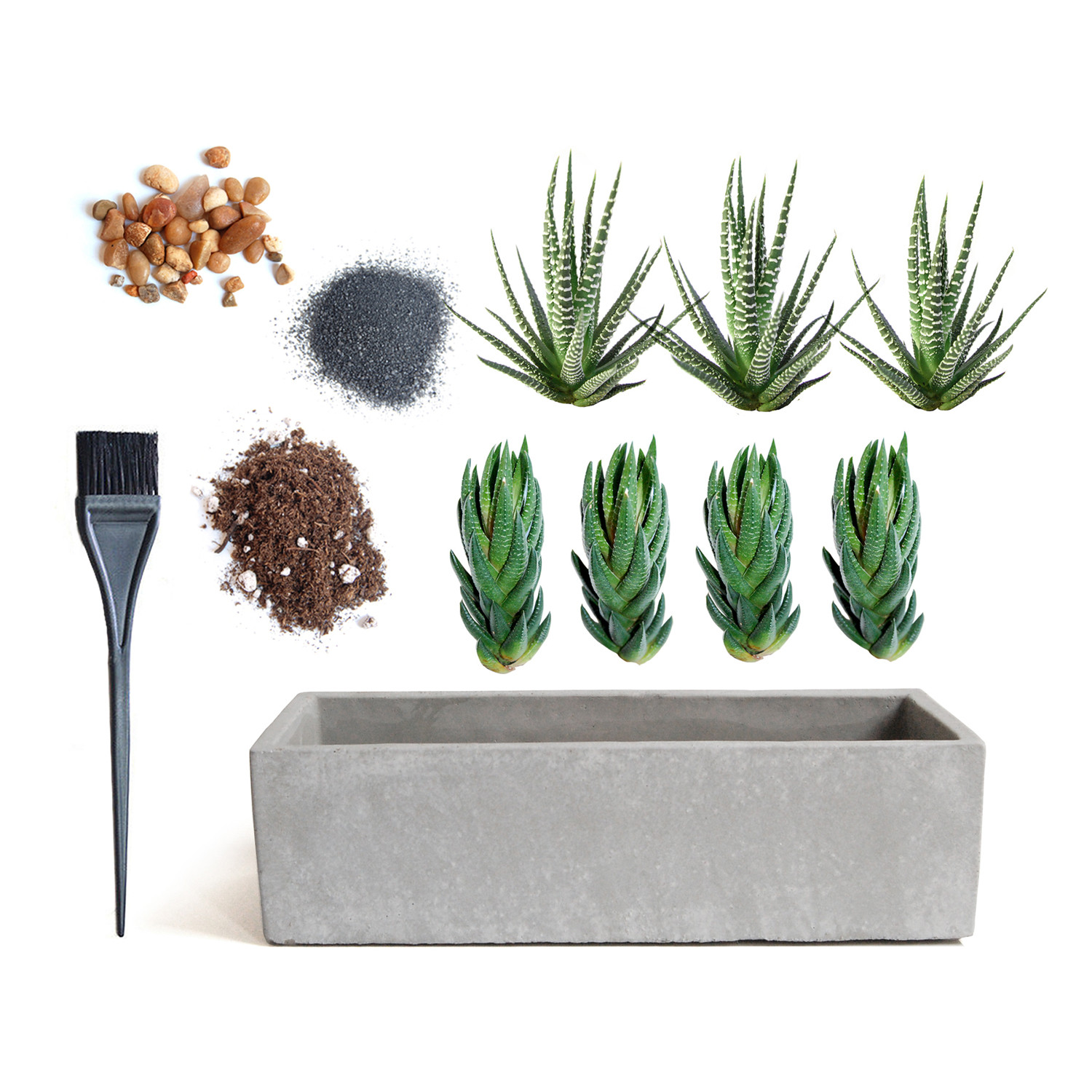planter un cactus. Black Bedroom Furniture Sets. Home Design Ideas