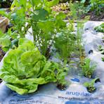 UrbMat Guided Garden