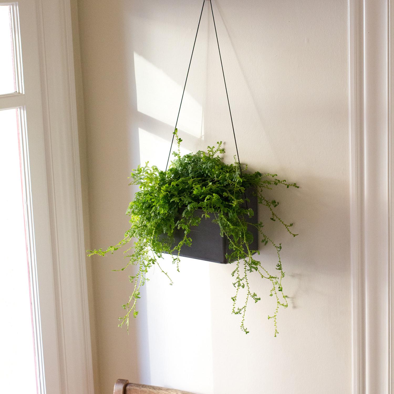hängen™ wall planter  opus garten  touch of modern - hängen™ wall planter