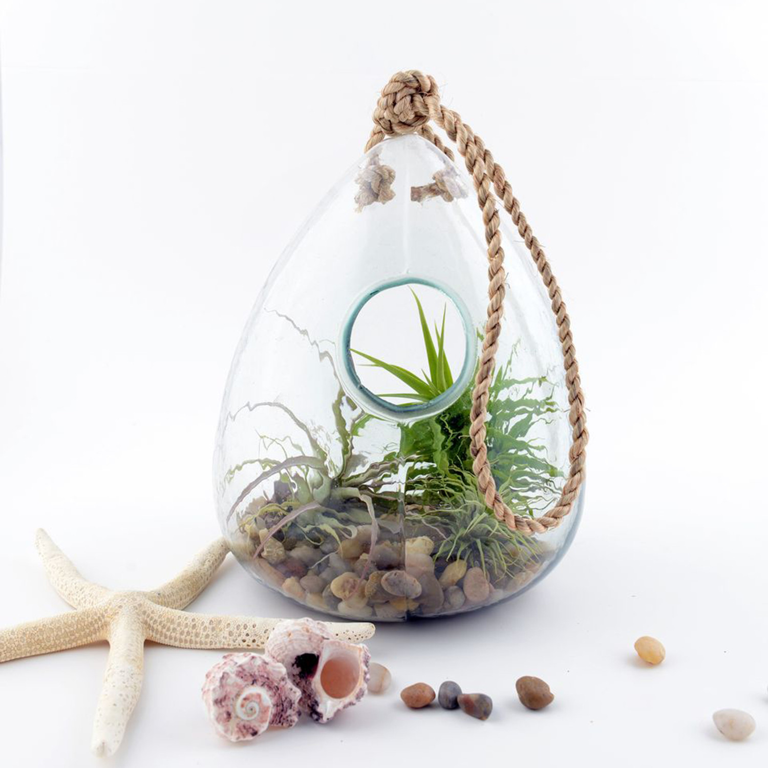 100 Recycled Glass Hanging Terrarium Twig Terrarium Touch Of Modern