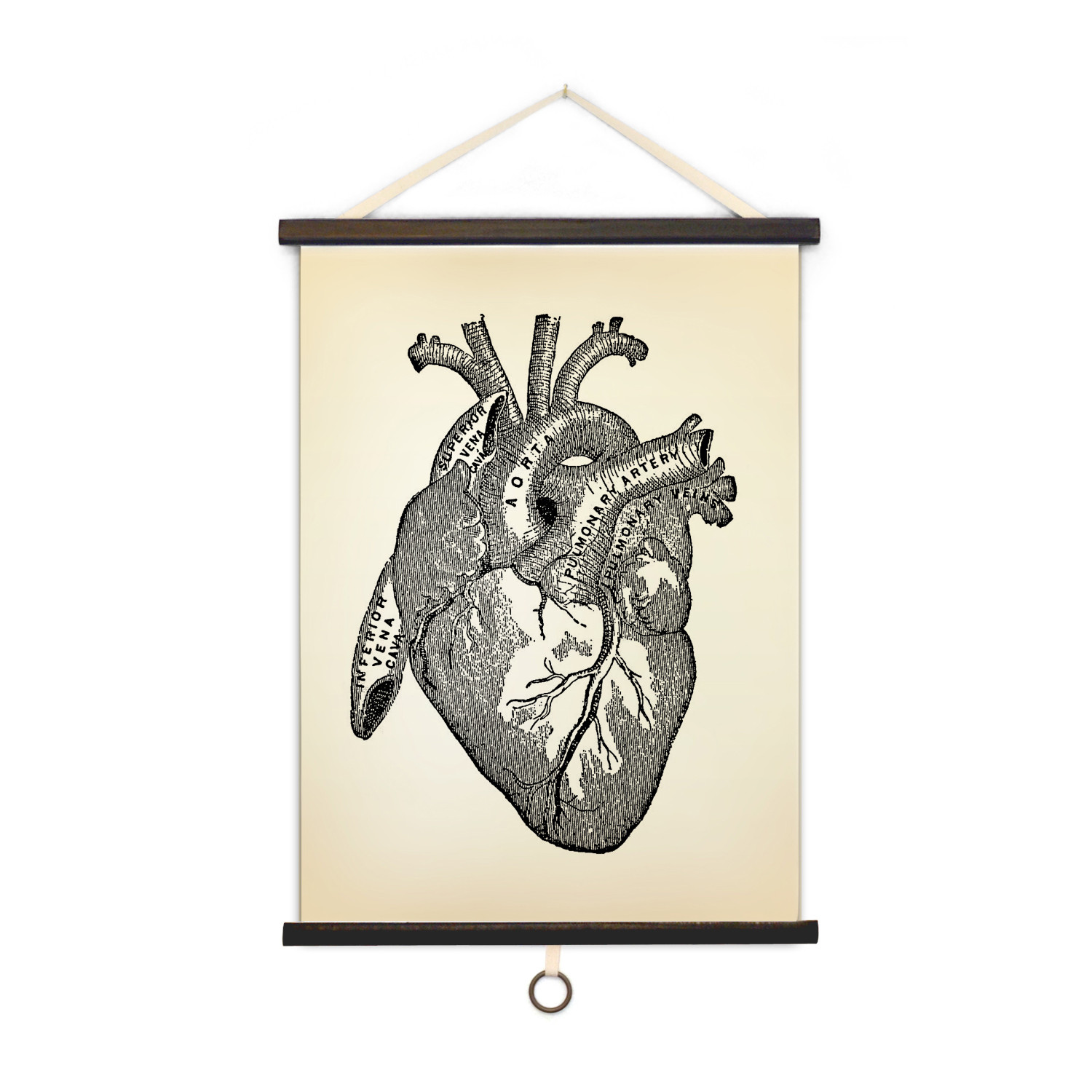 Vintage Anatomy // Heart - Curious Prints - Touch of Modern