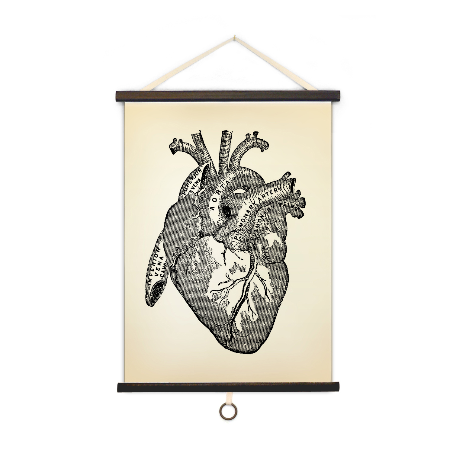 Vintage Anatomy Heart Curious Prints Touch Of Modern
