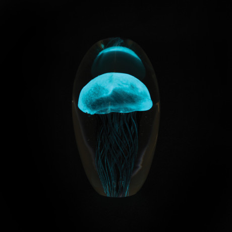 Large Jellyfish