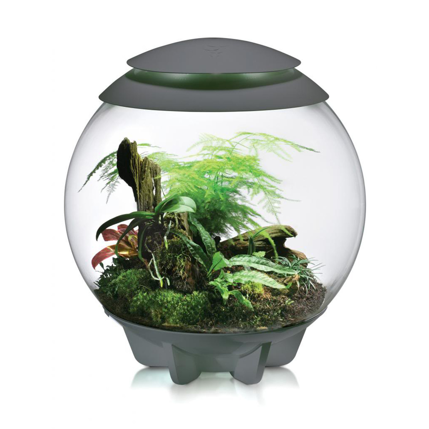 Biorb Air Terrarium Grey Biorb Air Terrarium Touch