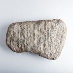 Ammonite Fossil Plate