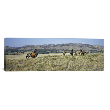 "Wild Mustang Herd, Black Hills Wild Horse Sanctuary, Hot Springs, Fall River County, South Dakota, USA // Panoramic Images (60""W x 20""H x 0.75""D)"