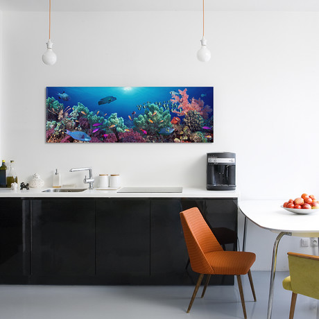 "School Of Fish Swimming Near a Reef, Indo-Pacific Ocean (36""W x 12""H x 0.75""D)"