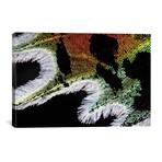 "Shimmering Madagascan Sunset Moth (26""W x 18""H x 0.75""D)"