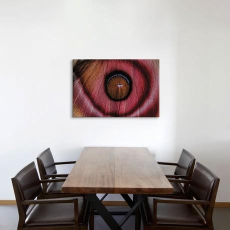 """Eye See // Madagascar Suraka Moth (26""""W x 18""""H x 0.75""""D)"""