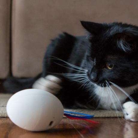 SHRU // The Intelligent Cat Companion