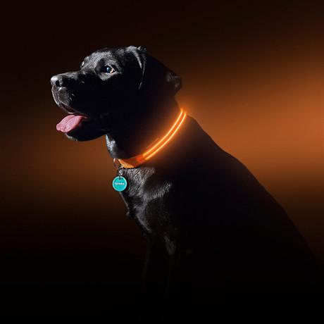 Sunset Orange // LED Dog Collar (Small)