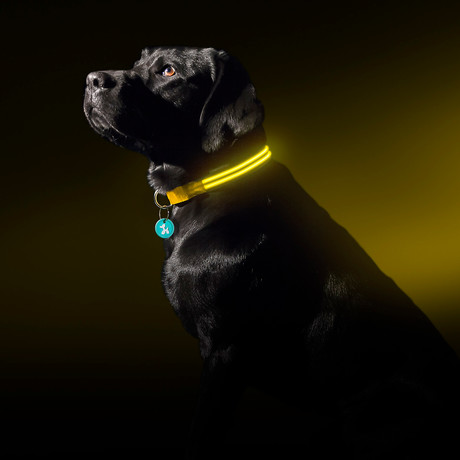 Yellow Gold // LED Dog Collar (Small)