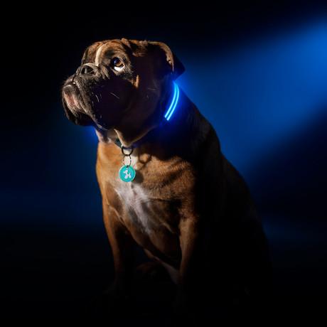 Electric Blue // LED Dog Collar (XS)