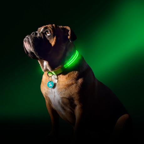 Green Gremlin // LED Dog Collar (XS)