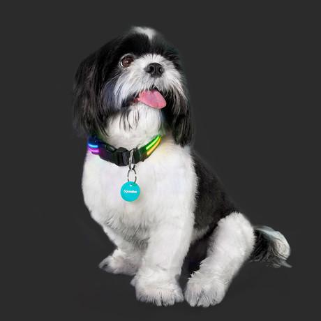 Double Rainbow // LED Dog Collar (XS)