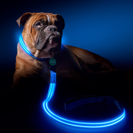 Electric Blue // LED Dog Lead