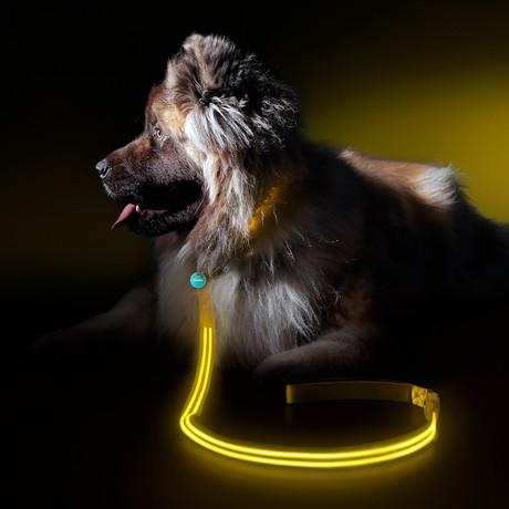 Yellow Gold // LED Dog Lead