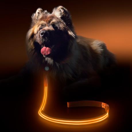 Sunset Orange // LED Dog Lead