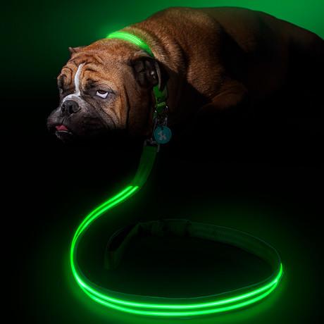 Green Gremlin // LED Dog Lead