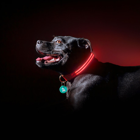 Lava Red // LED Dog Collar (XS)