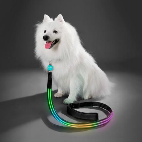 Double Rainbow // LED Dog Lead