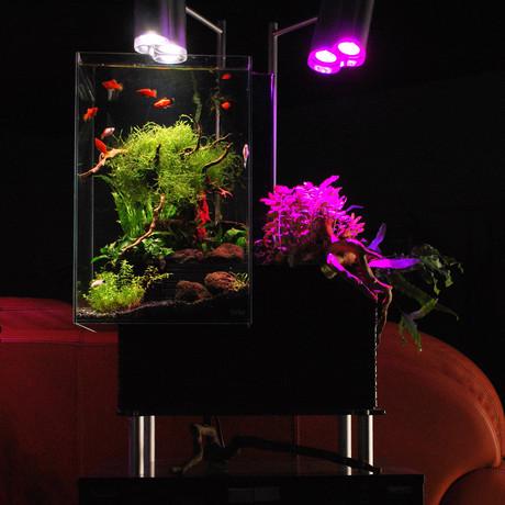 Brio aquaponics urban aquariums eco gardens touch for Aquaponics aquarium