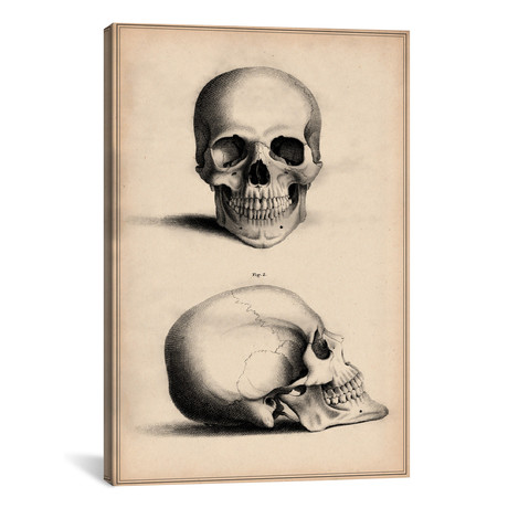 Human Skull Engraving
