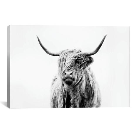 Portrait Of A Highland Cow // Dorit Fuhg