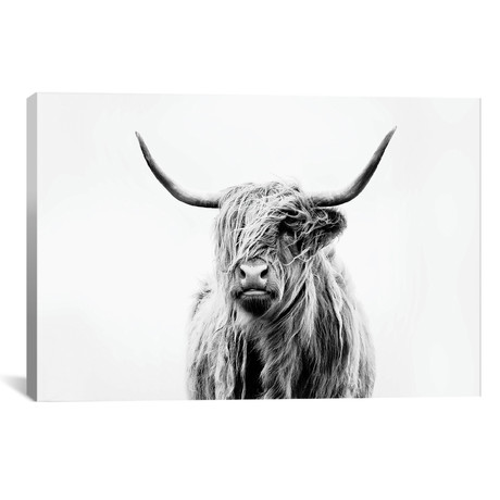 "Portrait Of A Highland Cow // Dorit Fuhg (26""W x 18""H x 0.75""D)"