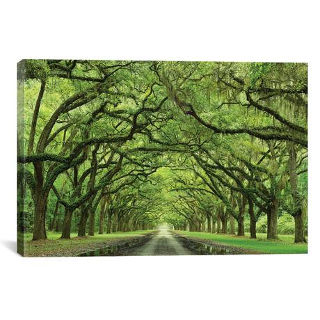 """Oaks Avenue // Moises Levy Canvas Print (26""""W x 18""""H x 0.75""""D)"""