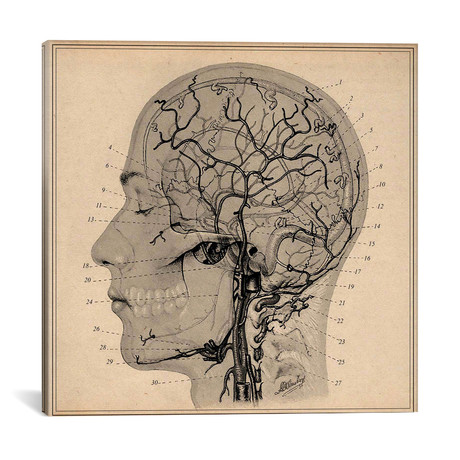 "Anatomy of Human Head // Unknown Artist (18""W x 18""H x 0.75""D)"