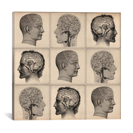 Human Head Anatomy Collage
