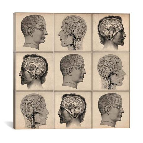"Human Head Anatomy Collage (18""W x 18""H x 0.75""D)"