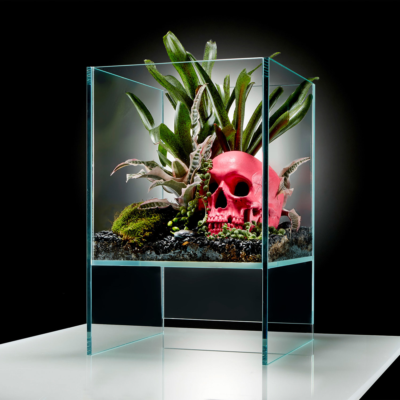 Elevate Terrarium // Pink Skull DIY Kit