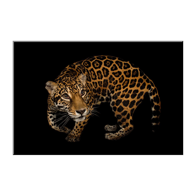 pushes pace place parkplace status your cover jag the txgarage jaguar elevating of park event dallas