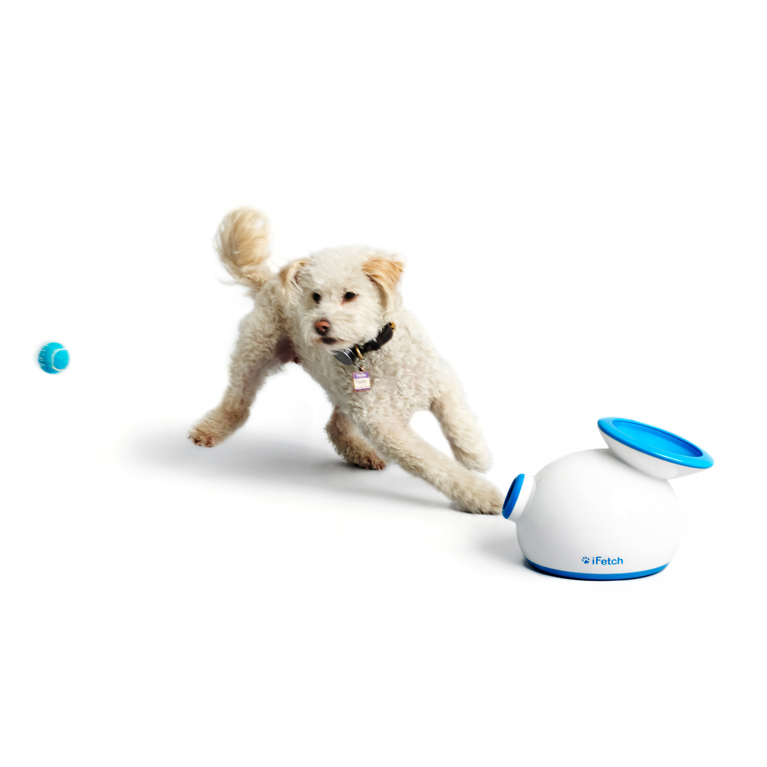 iFetch Interactive Dog Fetch Toy Small Dogs iFetch Touch of