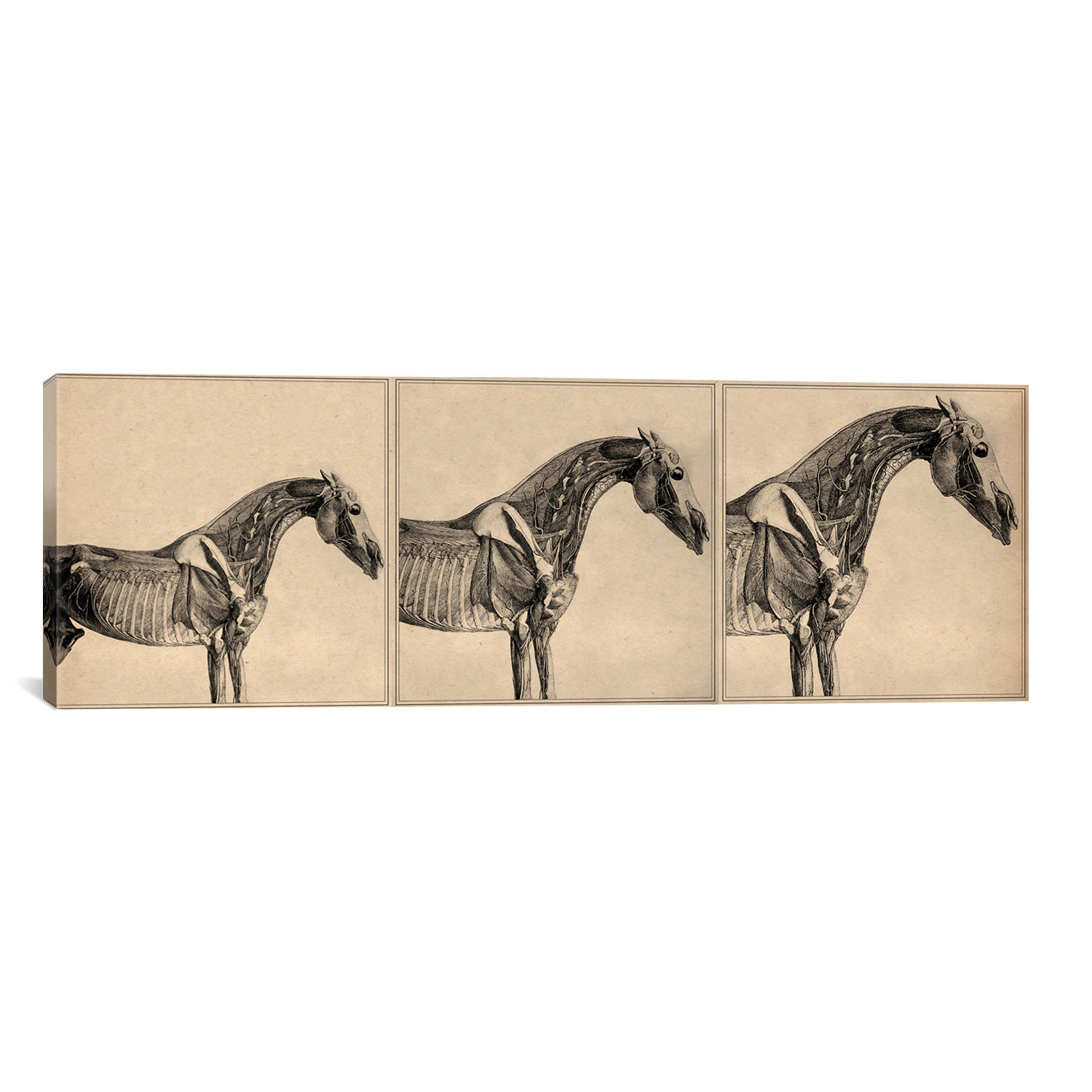 The Anatomy of the Horse Collage // George Stubbs (36\