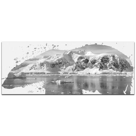 Polar Bear Arctic // Gray