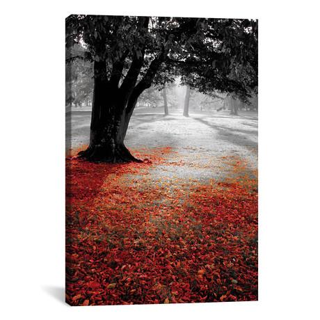 """Autumn Contrast // PhotoINC Studio (18""""W x 26""""H x 0.75""""D)"""
