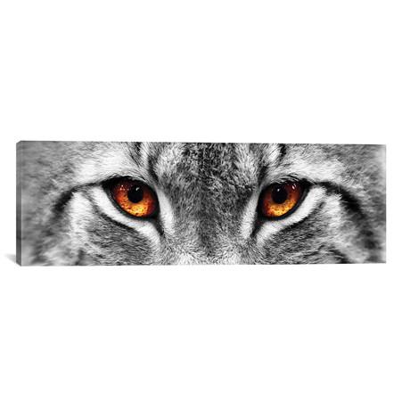 """Lynx Eyes // PhotoINC Studio (36""""W x 12""""H x 0.75""""D)"""