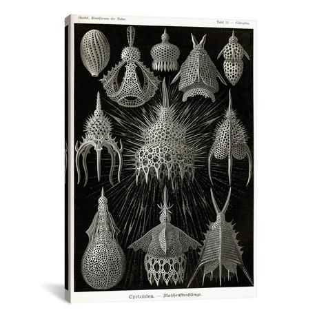 "Cyrtoidea - Scheiben-Strahlinge - Heliodiscus by Print Collection (18""W x 26""H x 0.75""D)"