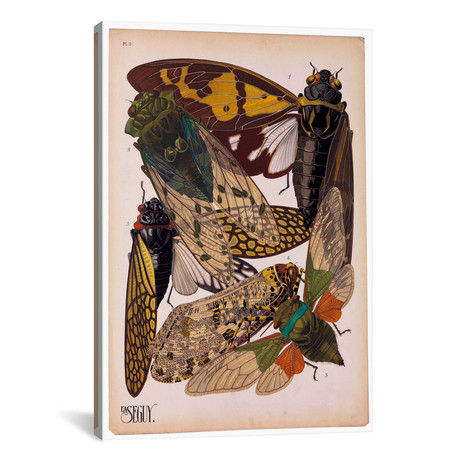 """Insects, Plate 11 (26""""W x 18""""H x 0.75""""D)"""