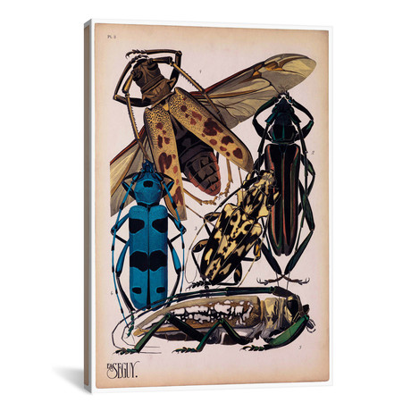 """Insects, Plate 13 by E.A. Seguy by Print Collection (18""""W x 26""""H x 0.75""""D)"""