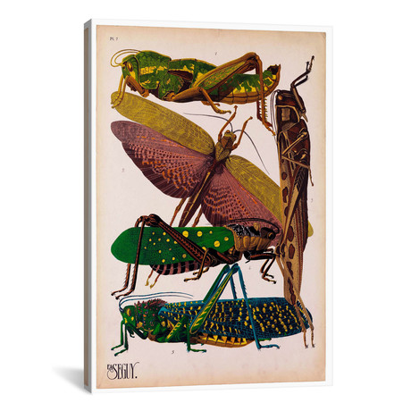 """Insects, Plate 16 by E.A. Seguy by Print Collection (18""""W x 26""""H x 0.75""""D)"""
