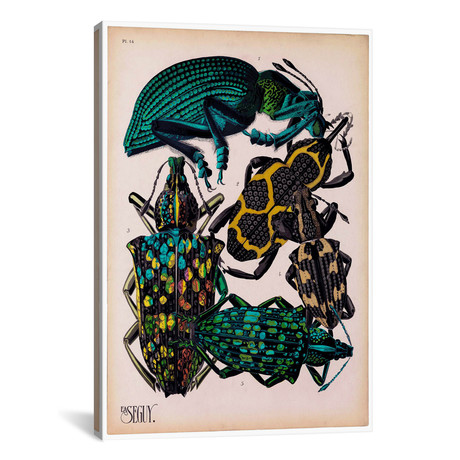 """Insects, Plate 6 by E.A. Seguy by Print Collection (18""""W x 26""""H x 0.75""""D)"""